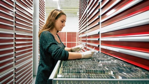 In der Biobank am Grazer Zentrum für Wissens- und Technologietransfer in der Medizin (ZWT) lagern rund 15 Millionen Proben menschlichen Gewebes - sie zählt zu den größten ihrer Art weltweit. (Bild: Bernhard Bergmann/Med Uni Graz)