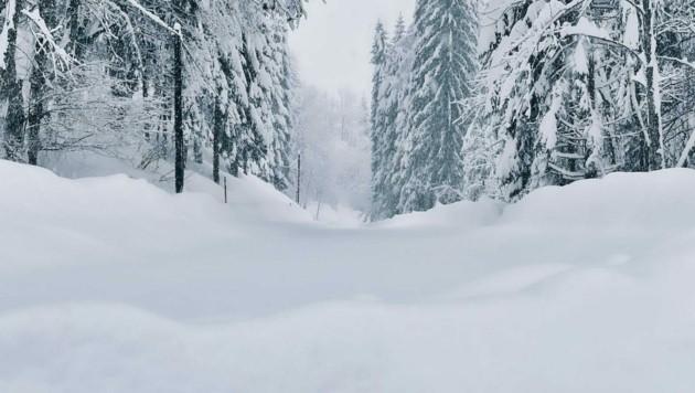 Das ist eigentlich die Plöckenpass Straße. Doch von dieser ist durch die Schneemassen derzeit nichts mehr zu sehen.