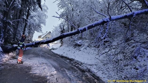 Umgestürzter Baum in Voitsberg (Bild: FF Voitsberg/Buchegger C.)