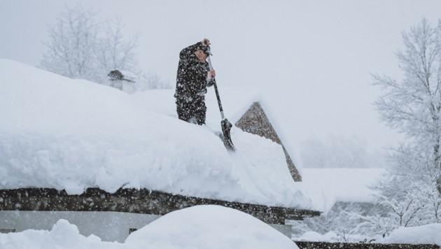Abschöpfen eines Dachs in Kals. (Bild: EXPA)