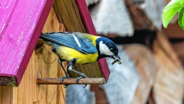Vögel haben genug Futter. (Bild: FOTOKERSCHI.AT / KERSCHBAUMMAYR)