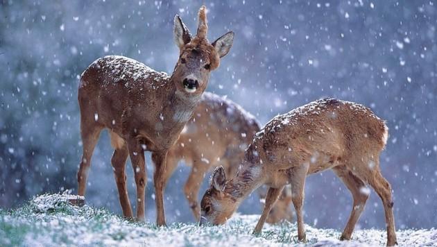Störungen von Wildtieren sollte man auf alle Fälle vermeiden.