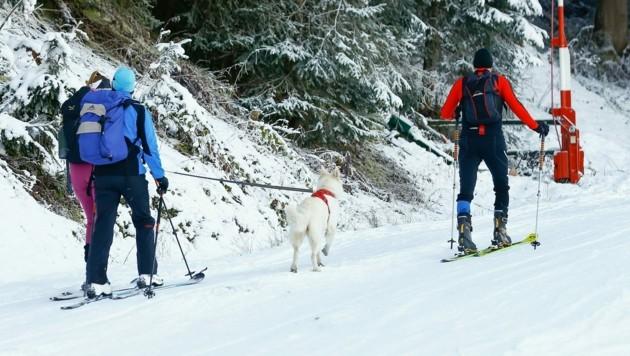 Auch mit Hund waren so manche Tourengeher am Wochenende unterwegs - hier in Wagrain.
