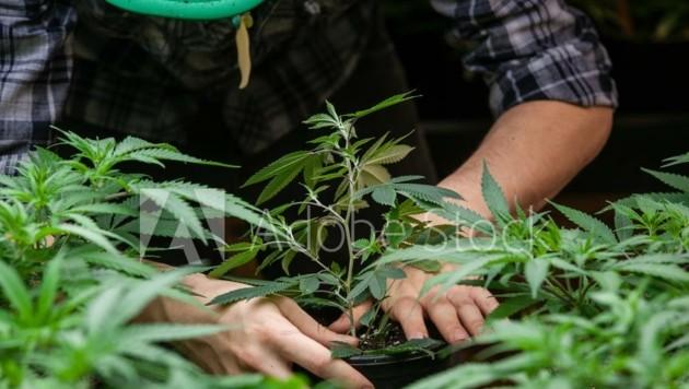 Im ehemaligen Kinderzimmer wurde Cannabis angepflanzt.