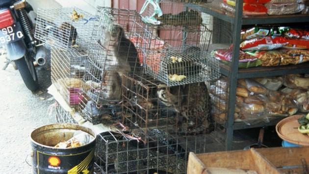 Illegaler Wildtierhandel als Schnittstelle zur Krankheitsübertragung (Bild: WWF/TRAFFIC)