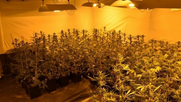 Die Drogenplantage erstreckte sich übers ganze Haus (Bild: APA/LPD WIEN)