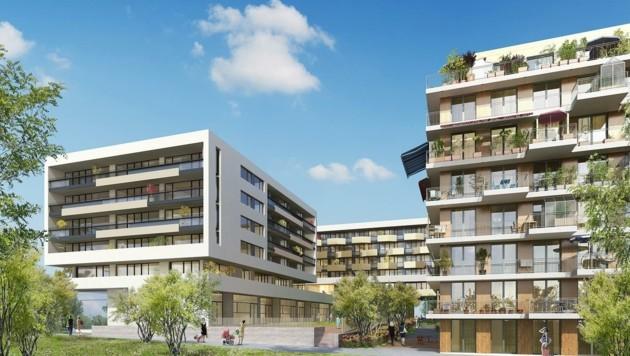 In der Seestadt Aspern (22. Bezirk) werden 73 Wohnungen errichtet. (Bild: SChreiner Kastler)
