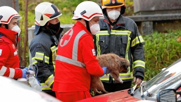 Bei dem Brand einer Wohnung in der Forellenwegsiedlung rettete die Berufsfeuerwehr einen kleinen Hund.