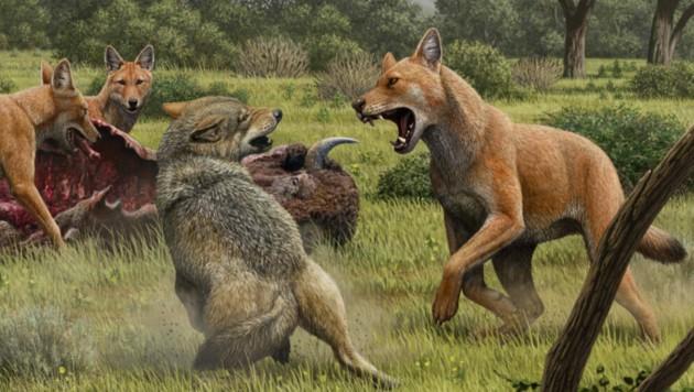 Der Canis dirus war deutlich größer als der Grauwolf. (Bild: Mauricio Anton)