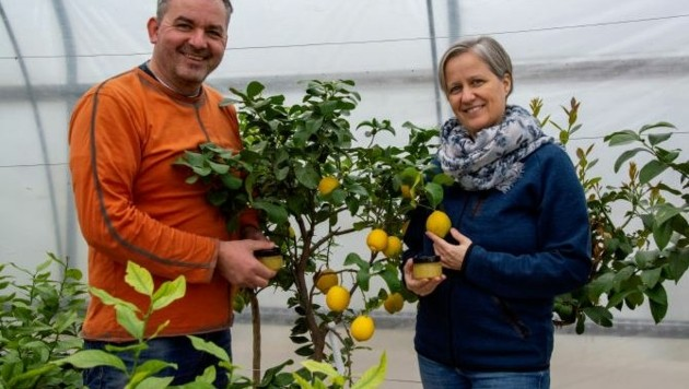 Hans Goldenits und seine Frau Anna sind Zitronenfans. Jetzt wachsen die gesunden Zitrusfrüchte sogar bei ihnen zu Hause in Tadten in einem Folientunnel. (Bild: Charlotte Titz)