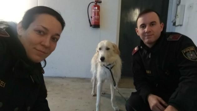 """Karin Fechner und Georg Hofmann retteten Hund """"Knopfi"""" (Bild: Polizei)"""