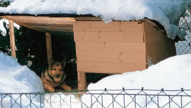 In diesem Verschlag wurde der alte Hund bei eisiger Kälte gehalten. Im Tierheim Villach wird er jetzt liebevoll umsorgt. Er genießt es. (Bild: ZVg)