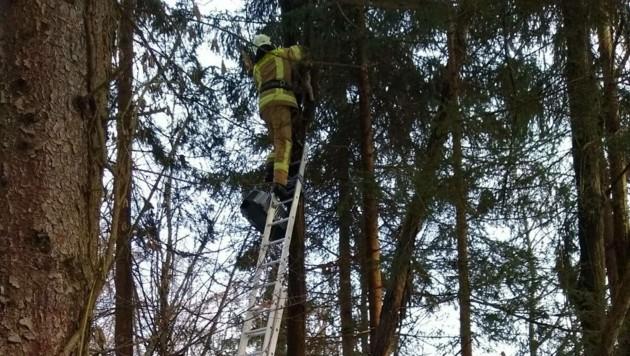 Die Feuerwehr rettete die Katze vom Baum (Bild: Berufsfeuerwehr Klagenfurt)