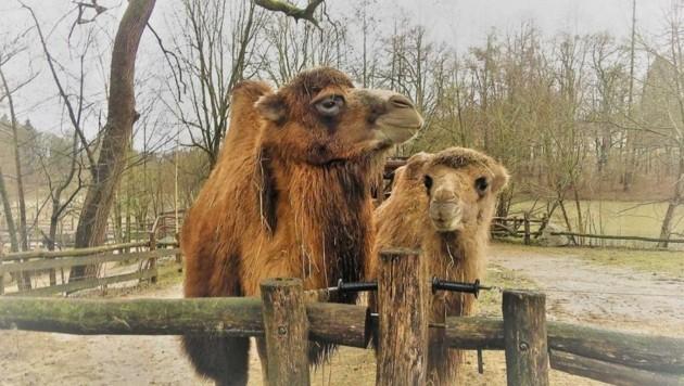 (Bild: Tierpark Stadt Haag)