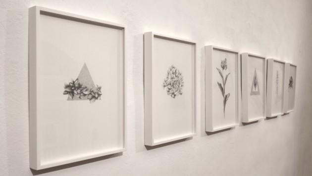 """""""Hairbarium"""": Lavinia Lanners Zeichnungen mit Bleistift auf Papier (Bild: Lukas Gwechenberger)"""