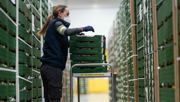 Rund 300 Mitarbeiter sind im Logistikzentrum des Lebensmittelhändlers in Laakirchen beschäftigt. (Bild: Markus Wenzel)
