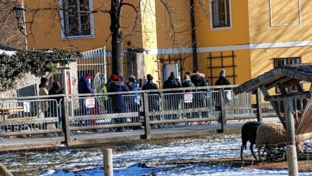 Beim Salzburger Zoo hieß es vor einem Besuch: anstellen (Bild: Markus Tschepp)