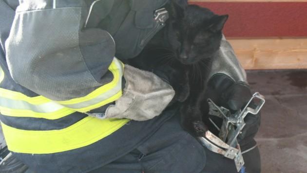 """Kater """"Raul"""" war in einer verbotenen Schlagfalle festgesteckt, Feuerwehrleute bargen ihn unter einer Bank und brachten ihn zum Tierarzt, der ihn von dem quälenden Stück Metall befreite. (Bild: ZVG)"""