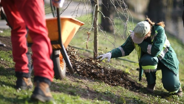 Jobs gibt es etwa bei der Pflege und Instandhaltung der Parks (Bild: (c) Anna Jurkovska)