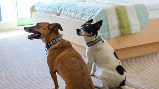 """Die """"Stars"""" Lucky und Amigo inspizieren ein Zimmer. (Bild: Martina Wende)"""