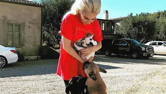 Zwei von Lady Gagas Hunden wurden entführt. (Bild: instagram.com/ladygaga)