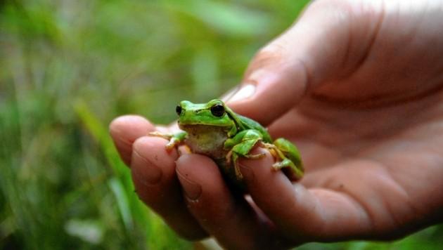 Die Maßnahme sichert das Überleben vieler Tier- und Pflanzenarten. (Bild: WWF/Gerhard Egger)