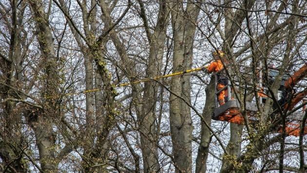 Baumschnitt im Schlosspark Steyr (Bild: moser)
