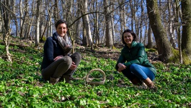 Angelika Ambrusch und Silvia Beck im Bärlauchparadies (Bild: Charlotte Titz)
