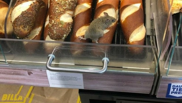 Suchbild mit Maus: Manchen Kunden verging da der Appetit (Bild: zVg)