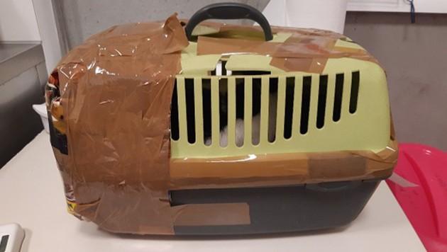 In dieser zugeklebten Box wurde der Kater entdeckt. (Bild: TierQuartier Wien)