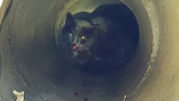 Der verletzte Kater verkroch sich in einem Kanalrohr. (Bild: TierQuarTier Wien)