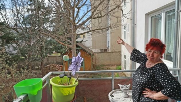 Penzingerin Helga S.: Viele stolze Bäume auf dem Nebengrundstück sollen einem Betonklotz weichen. (Bild: Zwefo)
