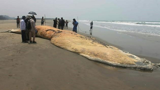 Eines der angeschwemmten Tiere am Strand Cox's Bazar (Bild: APA/AFP/Miraj Kateb)
