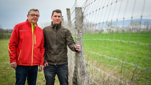 Kurt Gstöttner will den Betrieb in Pasching schon bald an Sohn Lukas (27, re.) übergeben. Dieser liebt die Arbeit mit den Tieren. (Bild: Alexander Schwarzl)