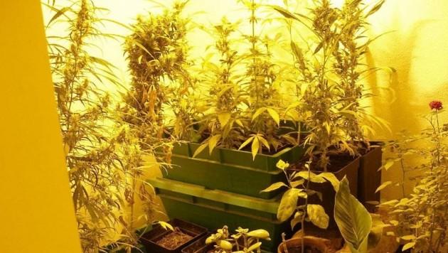 In der Wohnung wurde Cannabiskraut sichergestellt. (Bild: Markus Tschepp)