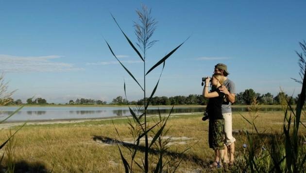 Im Seewinkel werden normalerweise vor Ort Vögel beobachtet. Exkursionen in die Natur sind heuer aber nicht möglich. (Bild: NTG/steve.haider.com)