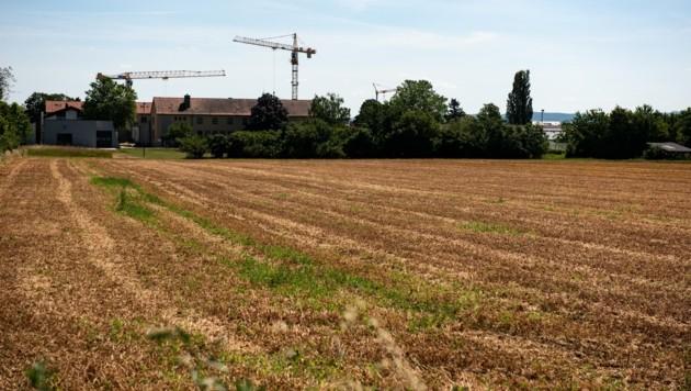 In Tulln liegen LFS-Flächen im Wert von 20 Millionen Euro brach. (Bild: Imre Antal)
