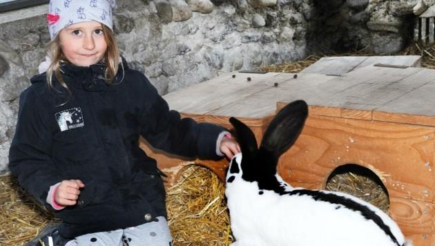 Auch Lea hilft in vierter Generation im Wildpark Hochrieß bereits mit. Der Tierpark braucht dringend finanzielle Unterstützung. (Bild: Crepaz Franz)