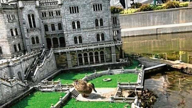 Eine Entenfamilie ist im Garten vom Klagenfurter Schloss Miramare eingezogen (Bild: Minimundus)