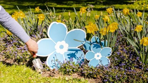 Stellvertretend für die 96 Mitglieder-Organisationen pflanzte Aichelburg im Hofgarten mehrere Vergissmeinnicht. (Bild: Vergissmeinnicht)