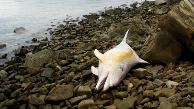 Chemische Verschmutzung der Meere ist ein großes Problem. (Bild: Morigenos)
