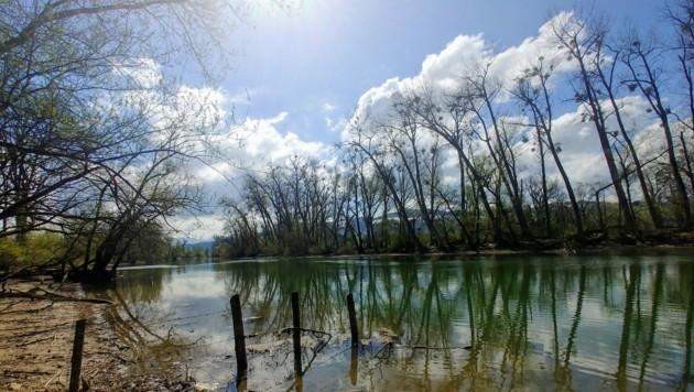 Entlang des alten Rheins gibt es viele Pflanzen- und Tierarten zu entdecken. (Bild: zvg/Rubina Bergauer)
