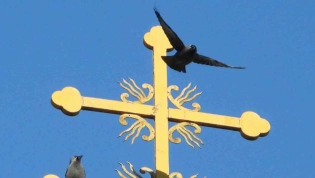 Hier wurden Dohlen bei ihrem kirchlichen Rastplatz beoabachtet. (Bild: naturbeobachtung.at/August Falkner)