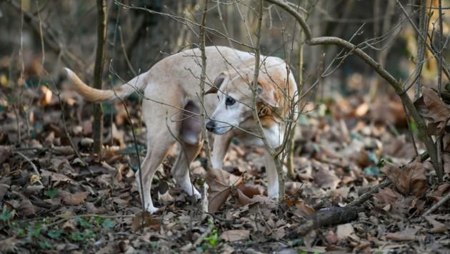 Vorsicht im Gebüsch: Dort legt der Tierhasser gerne Köder aus. (Bild: Harald Dostal)