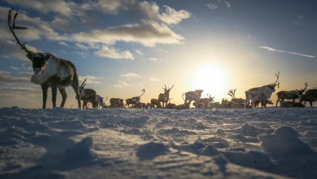 (Bild: ©Artem Markin - stock.adobe.com)