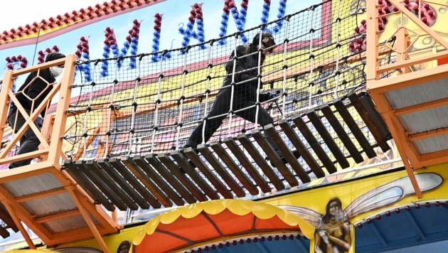 Der Prater war Schauplatz einer außergewöhnlichen Übung mit ernstem Hintergrund. (Bild: APA/HANS PUNZ)