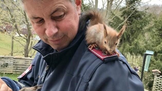 """""""Inspektor Dolittle"""": Im Naturwinkel Saufuß sorgt Rudolf Pilz für verletzte Tiere wie Eichhörnchen und Feldhasen. (Bild: Schulter Christian)"""