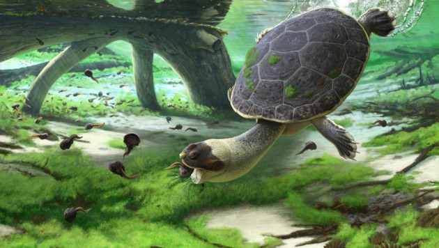 Künstlerische Illustration: So könnte die Schnellköpfige Frosch-Schildkröte ausgesehen haben. (Bild: Université de Fribourg/Andrey Atuchin)