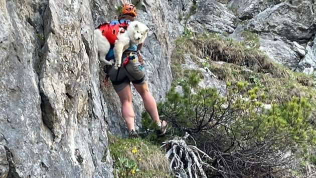 Hundeführer Anton Lehner seilte sich und Coco aus der Wand ab. (Bild: Bergrettung Hall)