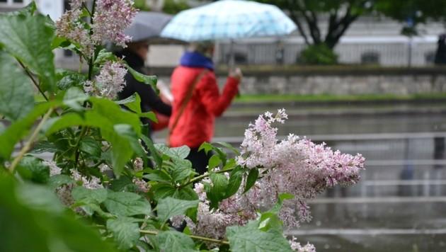 Das Wetter ist gerade so, wie es die Natur braucht: Es regnet viel. (Bild: Wolfgang Spitzbart)